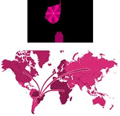 Exportamos para diversos Países